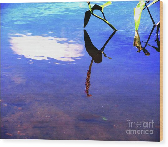 Silhouette Aquatic Fish Wood Print