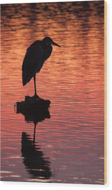 Silhouette Of A Heron Wood Print by Matt Dobson