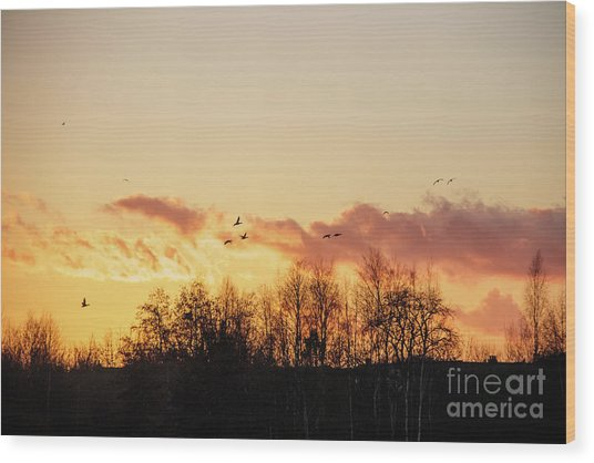 Silhouette Of Birds Wildfowl Geese Flying Off To Roost At Sunset Wood Print
