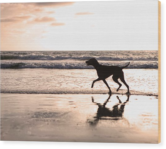 Silhouette Of Dog On Beach At Sunset Wood Print