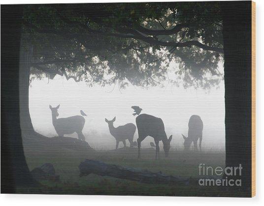 Silhouette Of Red Deer - Cervus Elaphus -  Hinds Or Females Grazin Wood Print