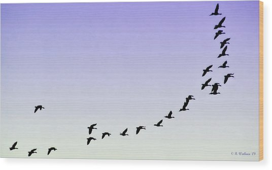 Silhouetted Flight Wood Print