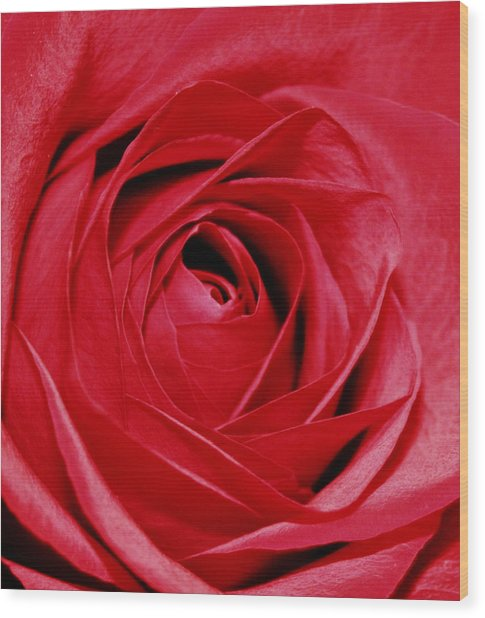 Silky Petals Wood Print by Cathie Tyler