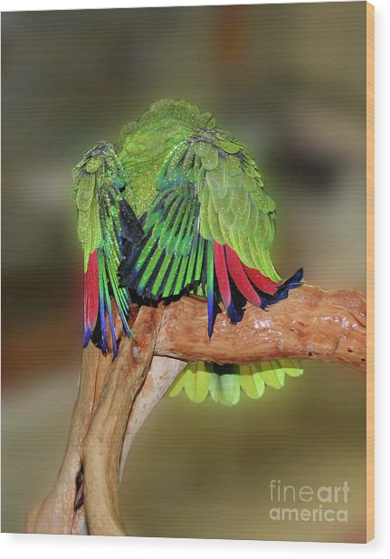 Silly Amazon Parrot Wood Print