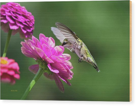 Wood Print featuring the photograph Simple Pleasure Hummingbird by Christina Rollo