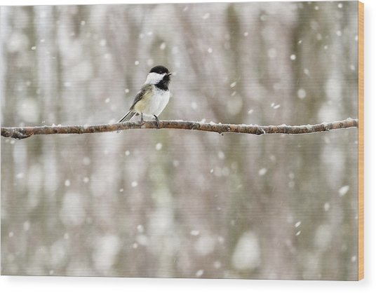 Sing Chickadee Sing Wood Print