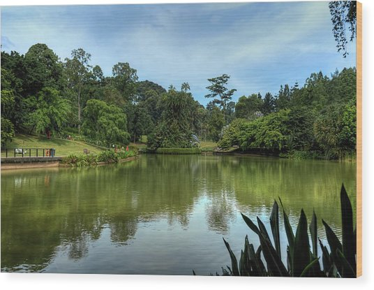 Singapore Botanical Gardens Wood Print