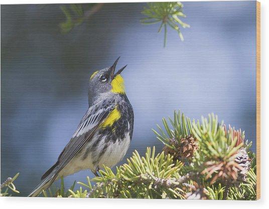 Singing Audubon's Warbler Wood Print