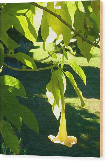 Single Angel's Trumpet Wood Print