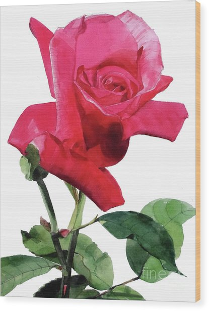 Single Bright Pink Rose Unfolding Wood Print