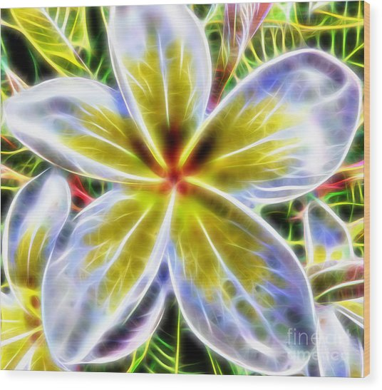 Single Fractal Frangipani Wood Print