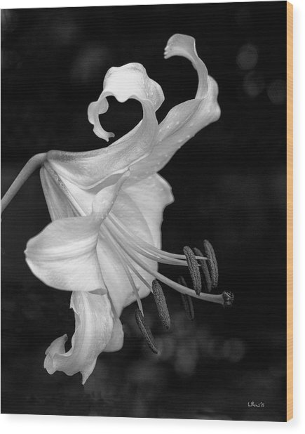 Single Lily In Black And White. Wood Print