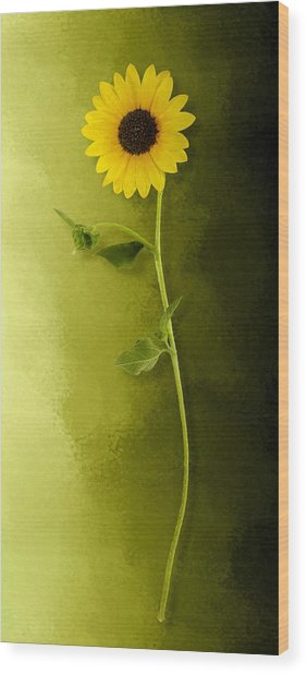 Single Long Stem Sunflower Wood Print