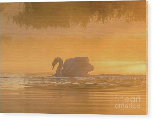 Single Mute Swan - Cygnus Olor - On Orange Golden Pond At Sunrise Wood Print