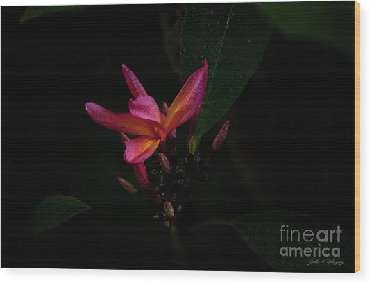 Single Red Plumeria Bloom Wood Print