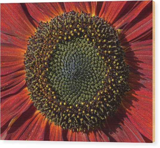 Single Sun Flower Wood Print