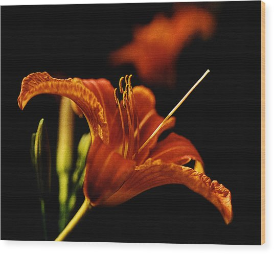 Single Tiger Lily Wood Print by Roger Soule
