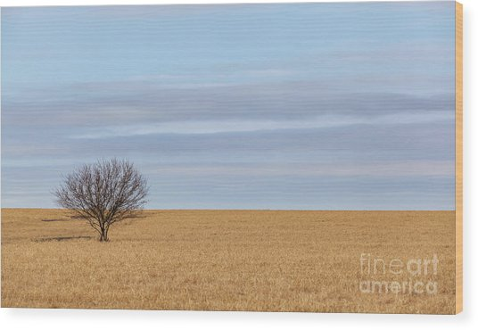 Single Tree In Large Field With Cloudy Skies Wood Print