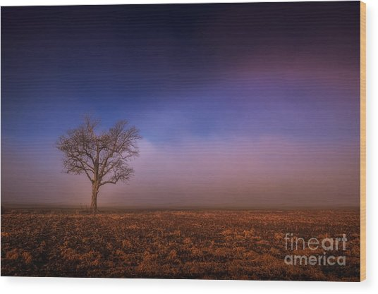 Single Tree In The Mississippi Delta Wood Print