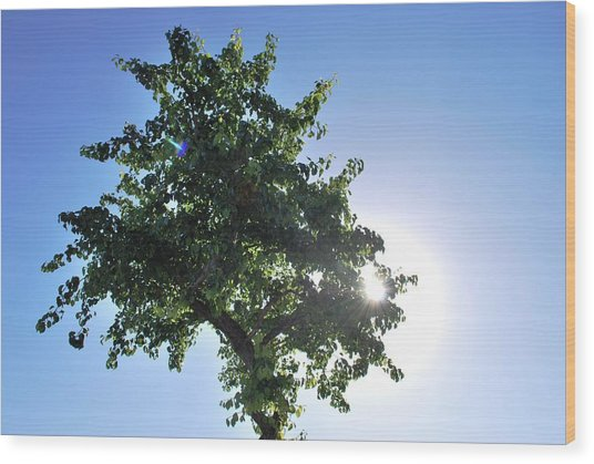 Single Tree - Sun And Blue Sky Wood Print