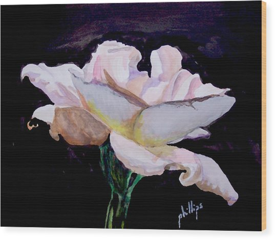 Single White Rose Wood Print by Jim Phillips