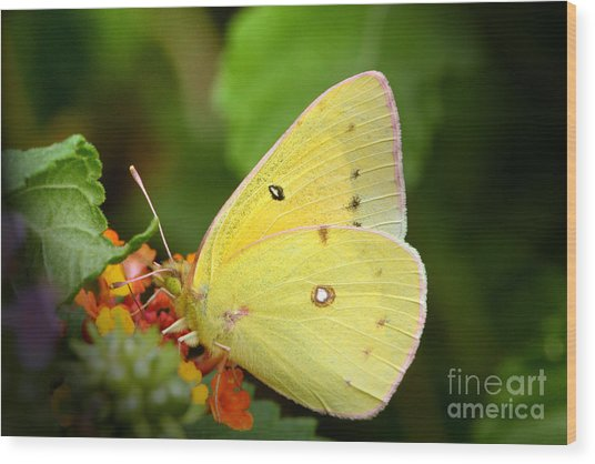 Sipping Nectar Wood Print by Jeannie Burleson