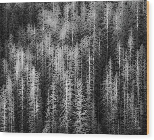 Sitka Abstraction Wood Print