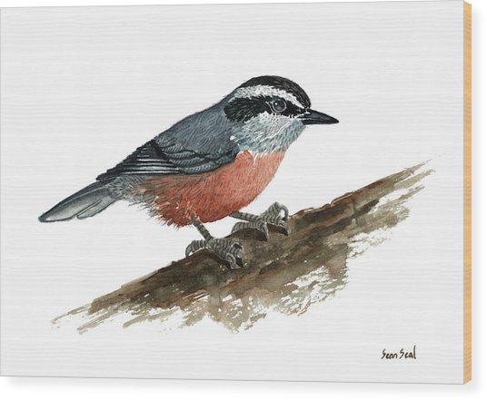 Sitta Canadensis Wood Print by Sean Seal