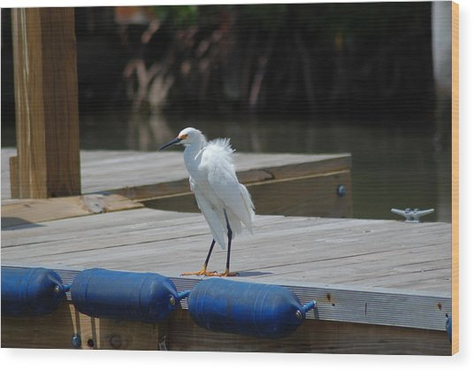 Sitting On The Dock Of The Bay Wood Print by Clay Peters Photography