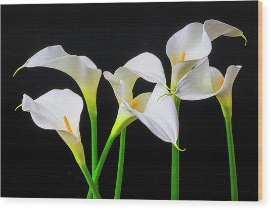 Six Calla Lilies Wood Print