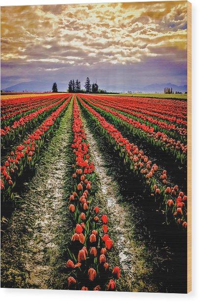 Skagit Tulips 2018 Wood Print