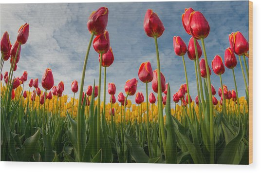Skagit Valley Spring Joy Wood Print