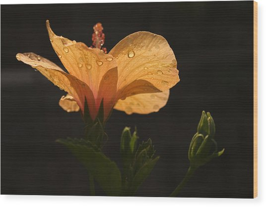 Skc 9937 Grace Of Hibiscus Wood Print
