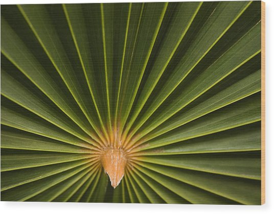 Skc 9959 Palm Spread Wood Print
