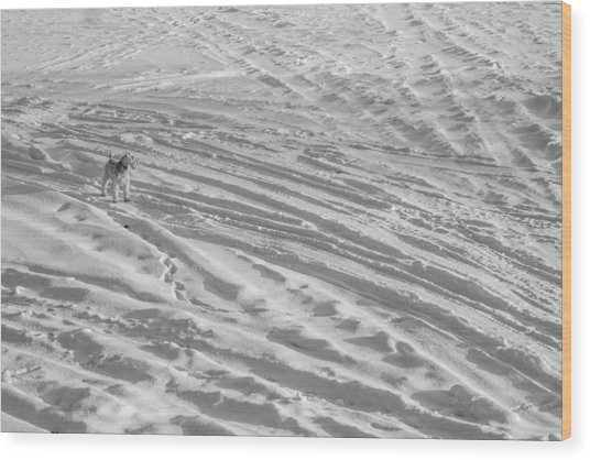 Ski Dog Wood Print by Gunther Schabestiel