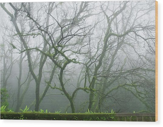 Skn 3720 Monsoon Landscape Wood Print