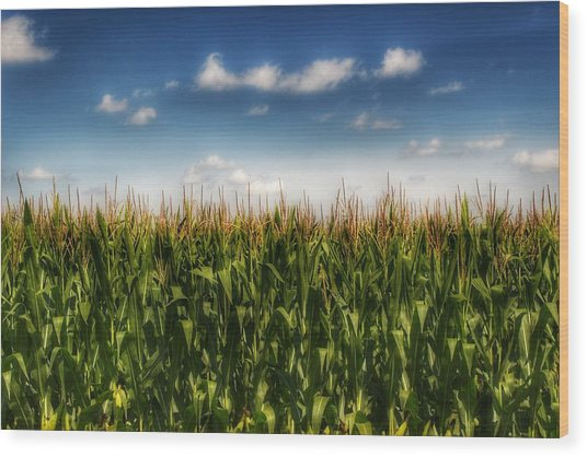 2005 - Sky High Corn Wood Print