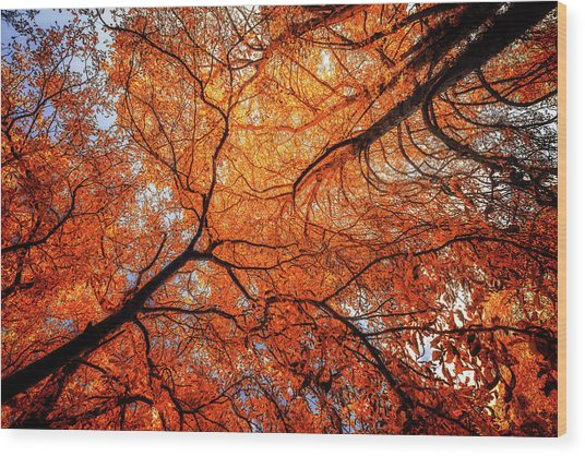 Sky Roots In Forest Red Wood Print