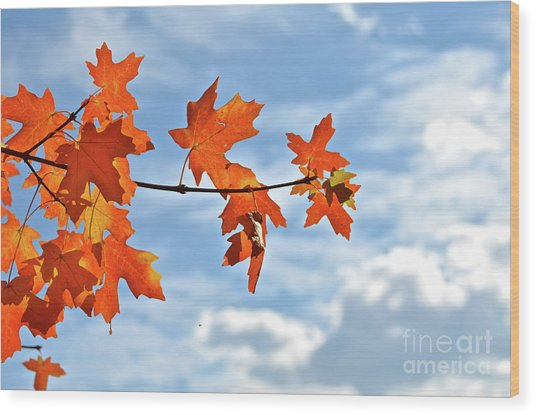 Sky View With Autumn Maple Leaves Wood Print