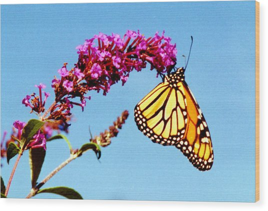 Skylands Monarch Wood Print by Tom LoPresti
