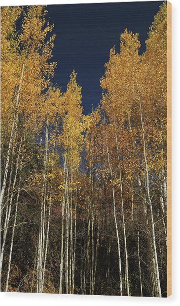 Skyward Aspens Wood Print
