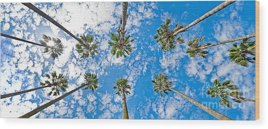 Skyward Palms Wood Print by Az Jackson