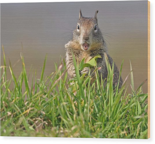 Slack-jawed Squirrel Wood Print