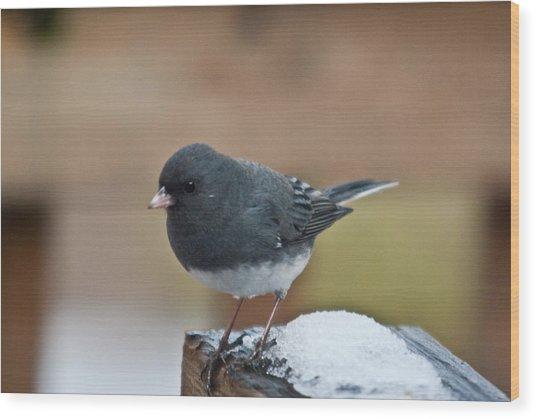 Slate Junco Feeding In Snow Wood Print