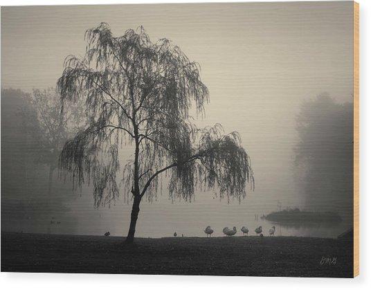 Slater Park Landscape No. 1 Wood Print