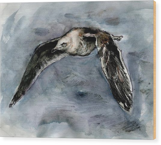 Slaty-backed Gull Wood Print