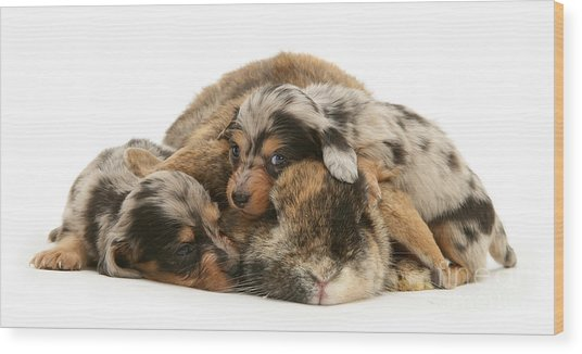 Sleep In Camouflage Wood Print