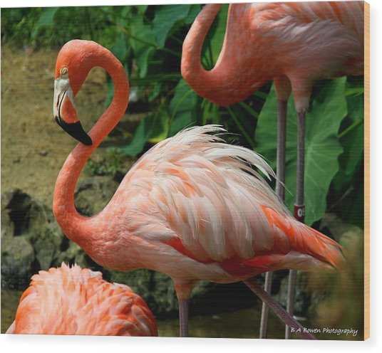 Sleeping Flamingo Wood Print
