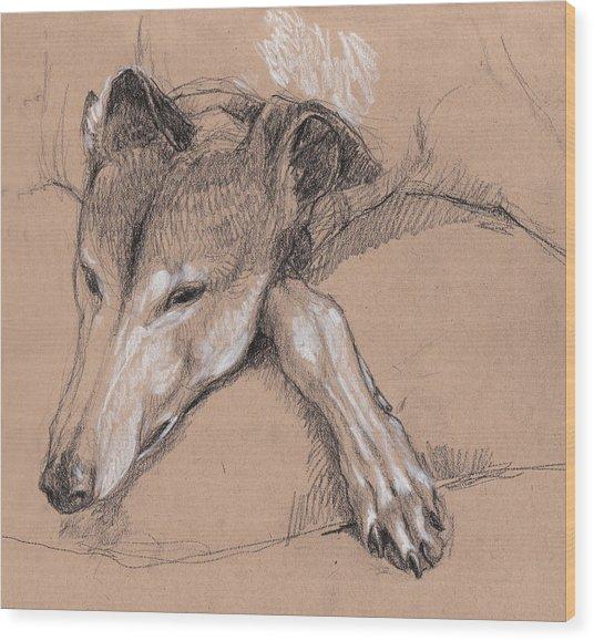 Sleeping Greyhound Wood Print