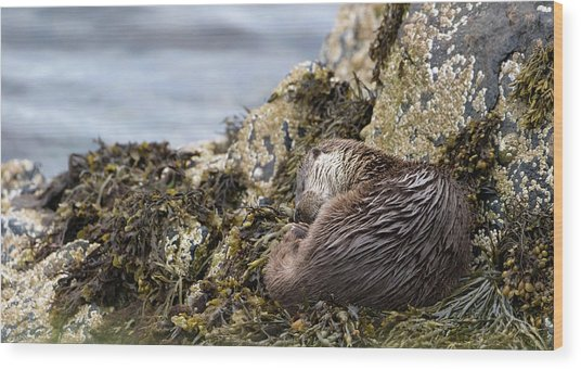 Sleeping Otter Wood Print
